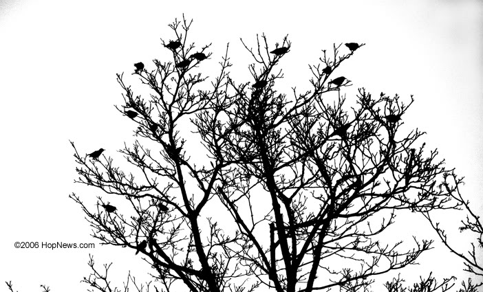 birds_tree_contrast